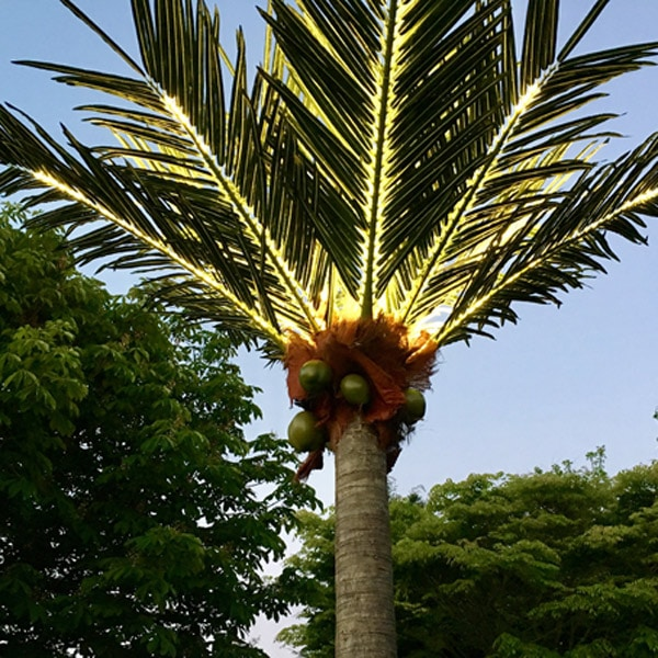 led palm tree hire