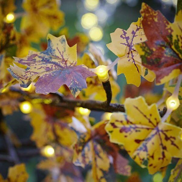 autumnal led maple tree