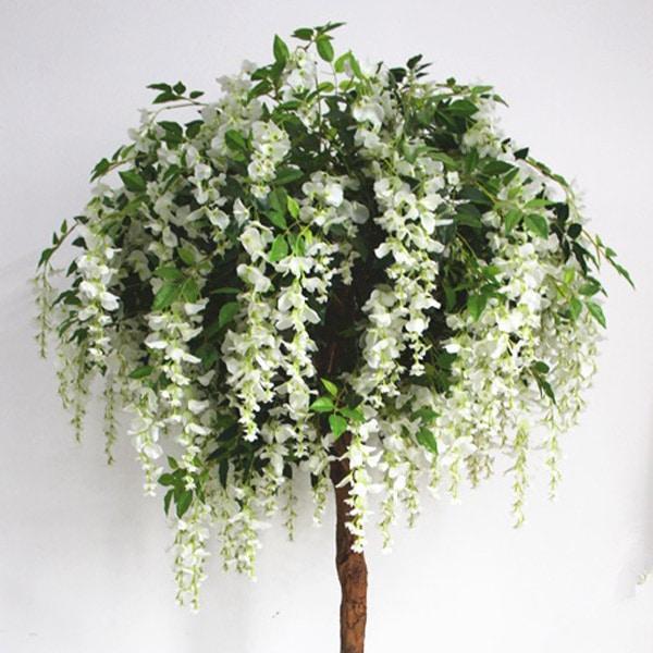 wisteria-pom-600
