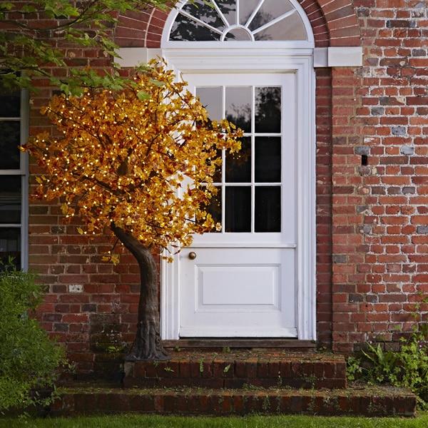 2m Autumn maple tree