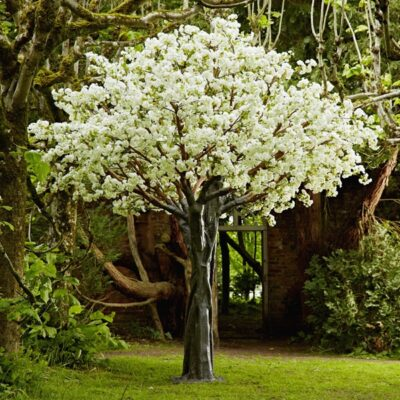 Trees in Bloom white blossom tree