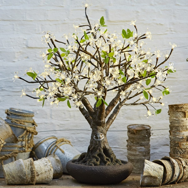 Bonsai cherry tree
