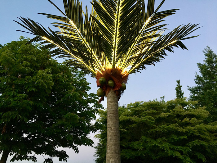 LED palm tree to rent
