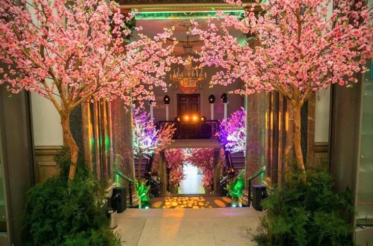 Japanese Blossom Trees