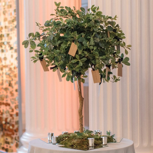 Pom Trees in Green available to hire