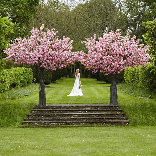 Hire Grande pink blossom trees by Twilight Trees
