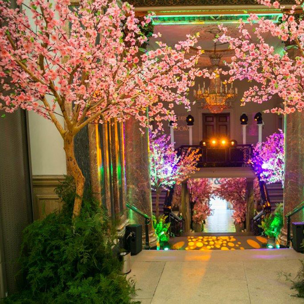 Hire pink Japanese blossom trees by Twilight Trees