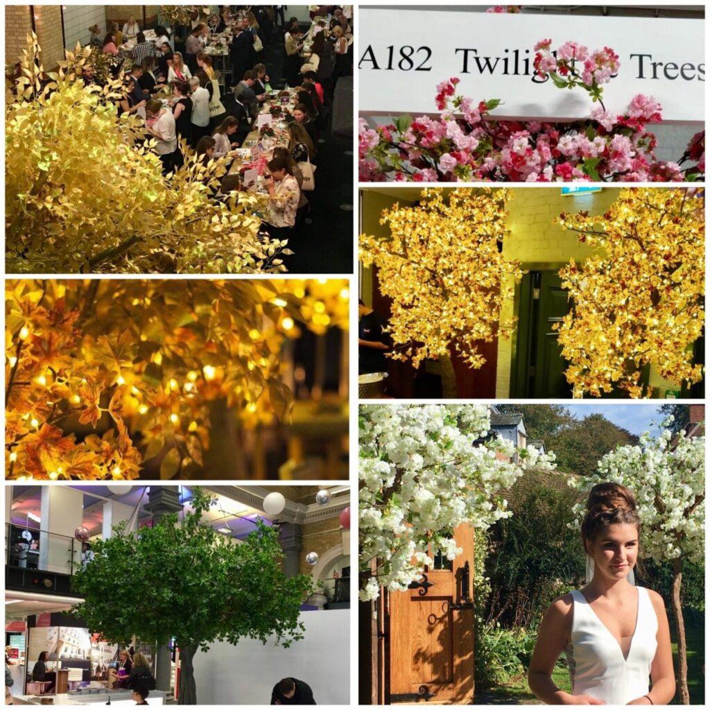 Twilight Trees enjoying 'show season'