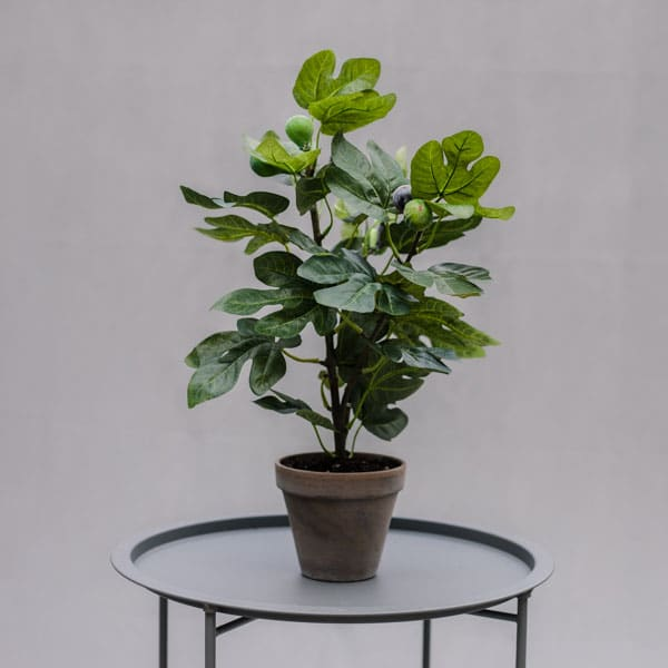 Small faux fig tree by Twilight Trees