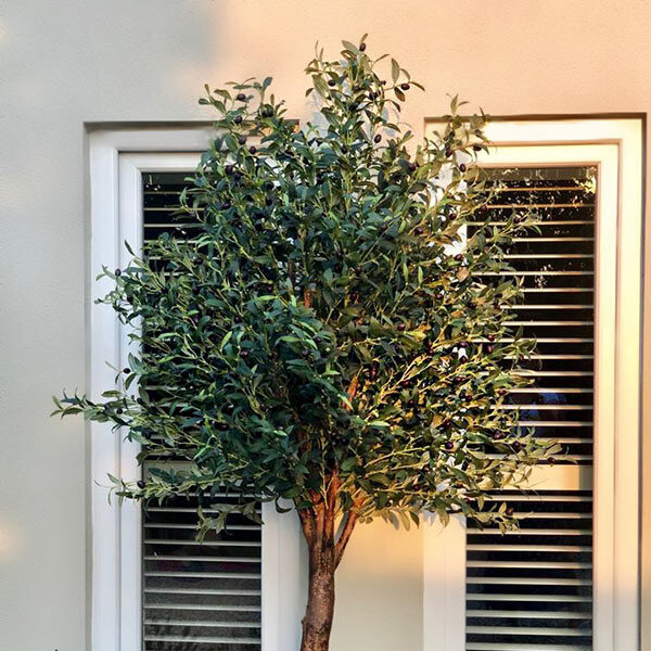 Large Olive Trees by Twilight Trees