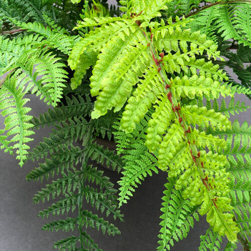 close up lime green fern
