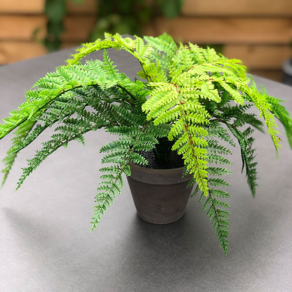 Small faux fern by Twilight trees