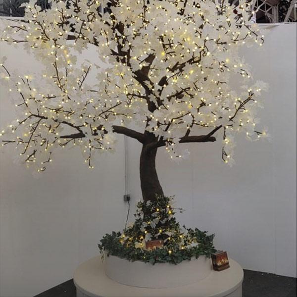 maple-tree-styling