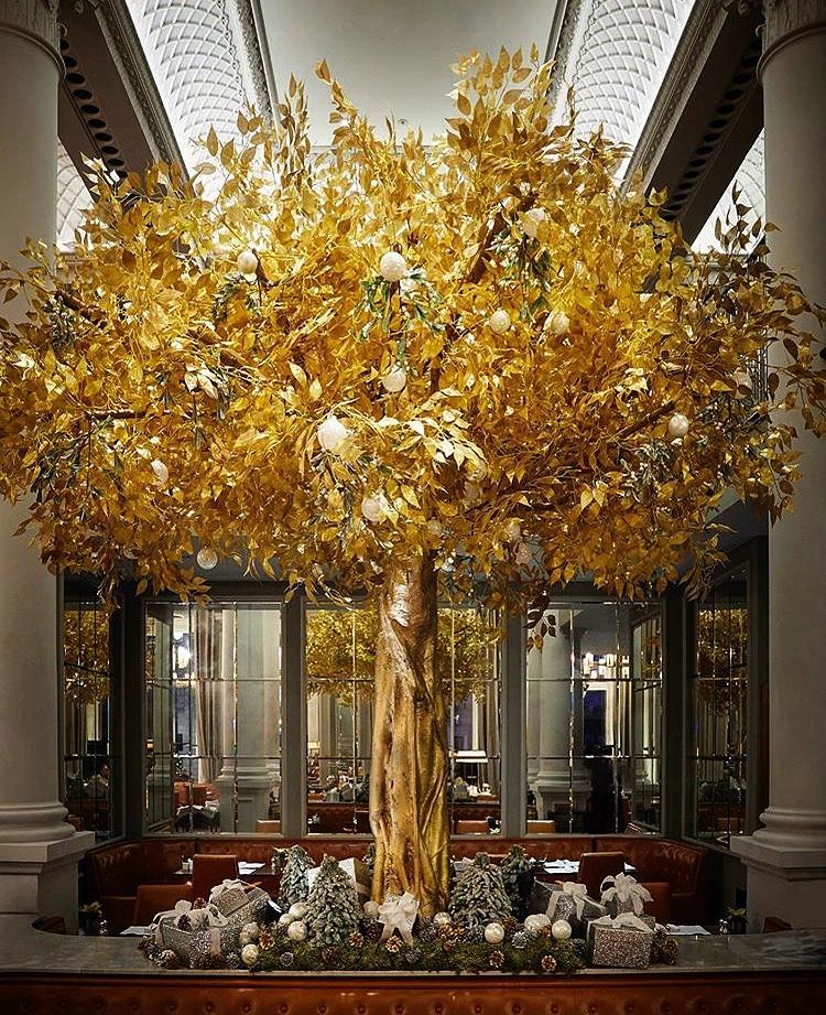 Twilight Trees' Golden Delicious tree