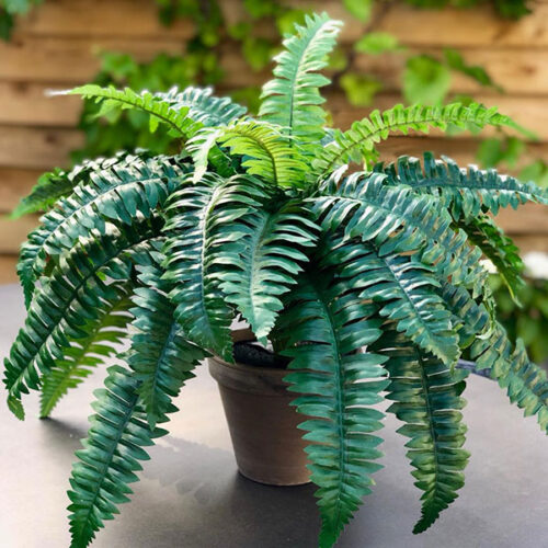 Medium faux fern in a terracotta pot by Twilight Trees