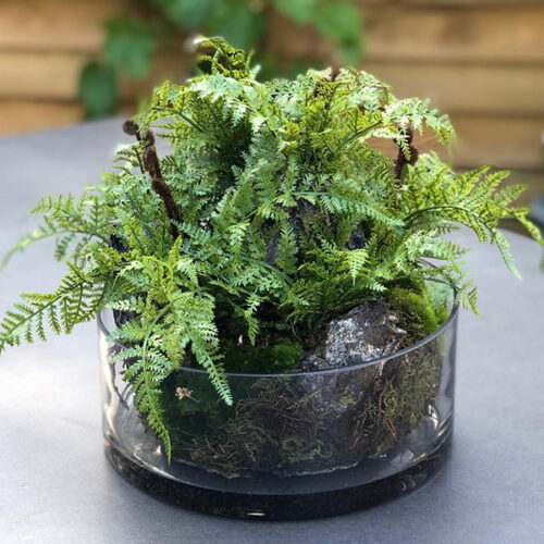 Faux fern in a shallow vase display by Twilight Trees