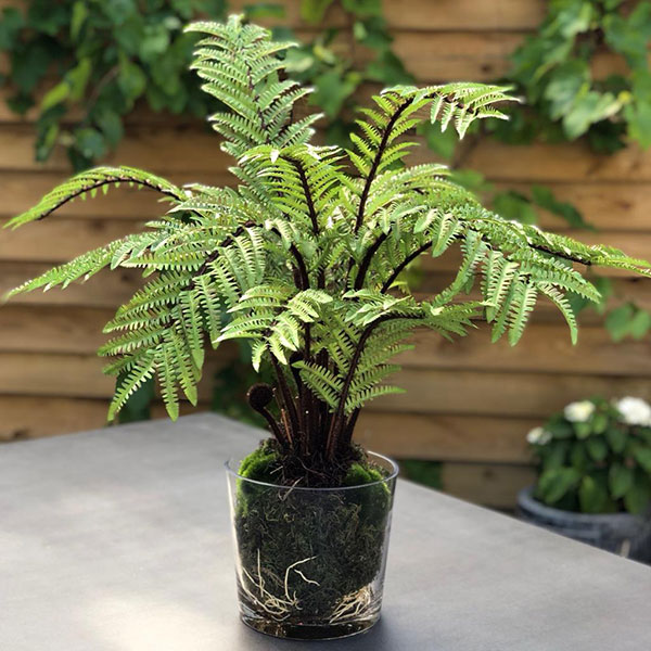 Faux tree fern in glass pot by Twilight Trees