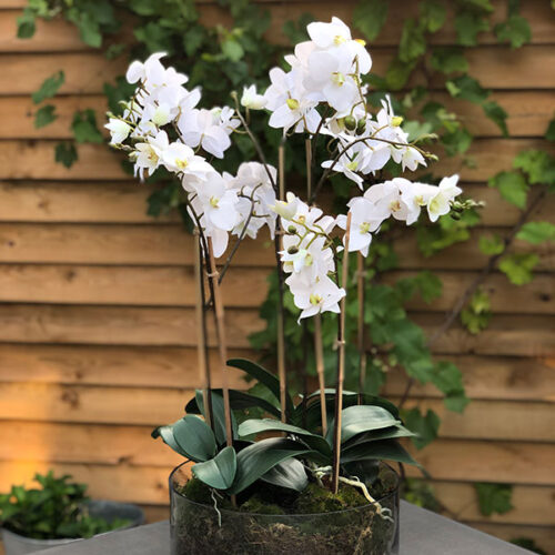Faux white orchids by Twilight Trees