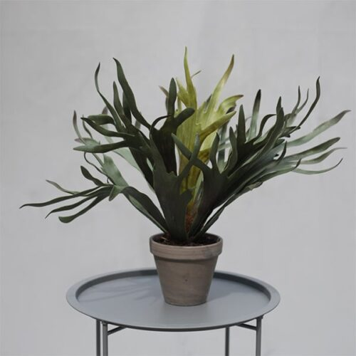 Staghorn faux plant by Twilight Trees
