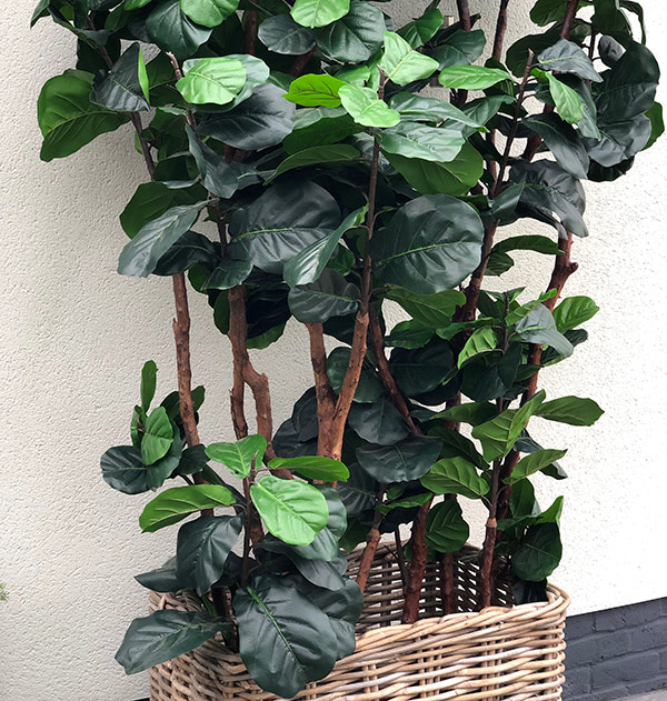 Faux Fiddle Plant by Twilight Trees